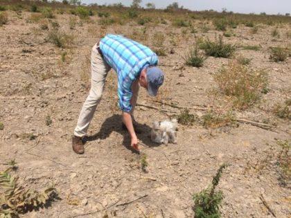 africrops! consulting hilft beim Aufbau der Ökologischen Landwirtschaft in Gambia