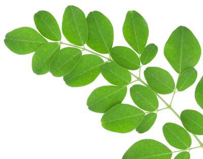 Moringa ist ein echter Energiebooster. Aber warum eigentlich?