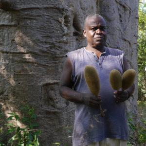 Tansania Baobab Sammlung