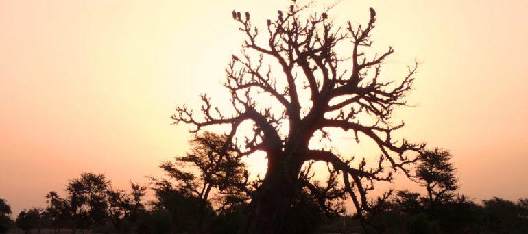 blog_baobab02